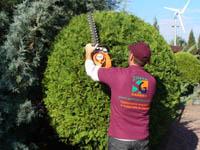 Подрязване на дървета