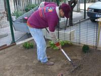 Обработка на почва за озеленяване