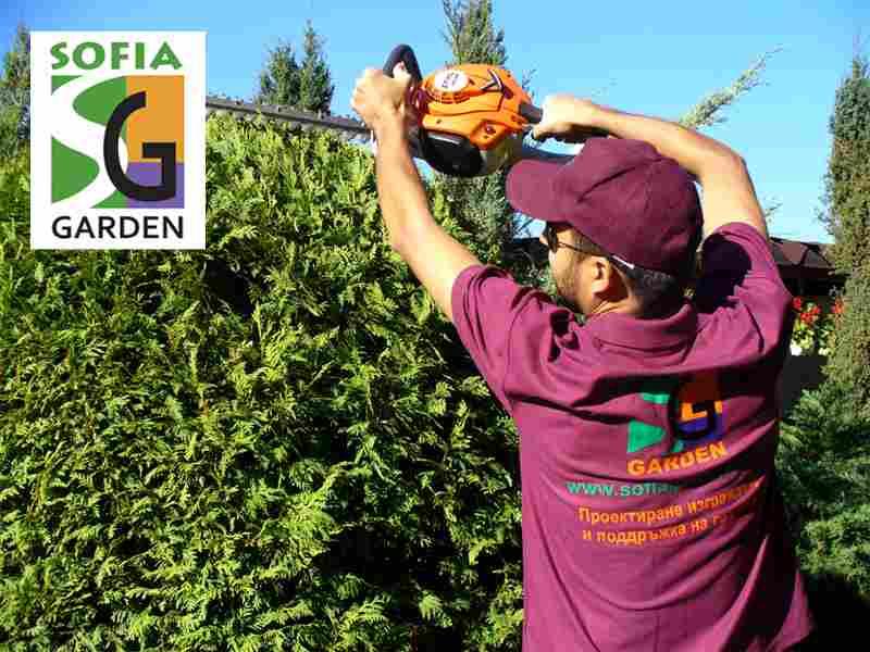 Подрязване на иглолистни храсти с храсторез