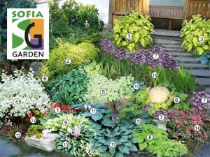 Визуализация на проект за озеленяване