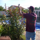 Подрязване на дървета и храсти