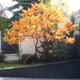 Засаждане на дървета овошки и цветя